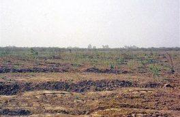 ۵۵۰۰کیلوگرم بذرهای مرتعی در یزد کشت میشود