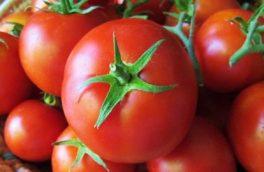 گوجه دهاقان در بازار میوه کشورهای خارجی