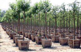 کاشت درخت به مناسبت دومین کنگره شهدا در کرمان