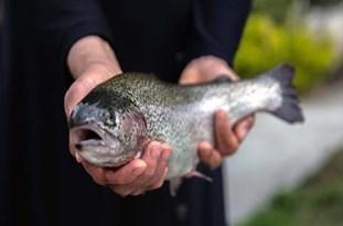 از شایعه تا واقعیت ابتلای ماهیهای خوزستان به بیماری