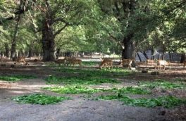 ۶ هزار هکتار از اراضی دشت سگزی به احیای فوری نیاز دارد