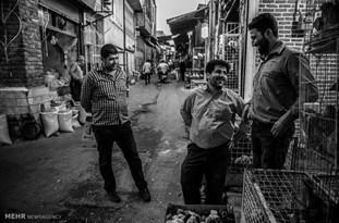 عملیات انتقال بازار پرندگان شهر قزوین موفق نبوده است