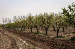 استان ایلام پیشرو در ایجاد جنگل و توسعه فضای سبز