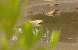 سامانه بارشی تا عصر فعال است/ دما از فردا کاهش مییابد