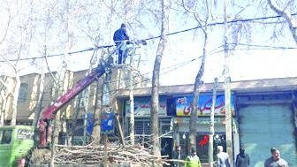 هرس نمودن درختان چنار خیابان امام خوانسار