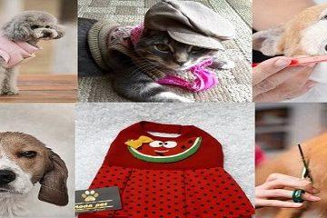 رونق خدمات لاکچری برای حیوانات خانگی نوکیسههای تهرانی/ از «لباس ولنتاین» و ساقدوش برای سگ تا «حمام لاکچری» و آرایش ویژه برای گربه! +عکس