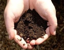 متولیان جلوی قاچاق خاک را بگیرند / فرسایش سالانه ۲ میلیارد تن خاک