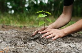 نهادهای نظارتی برای فرهنگسازی در حوزه درختکاری توجه داشته باشند