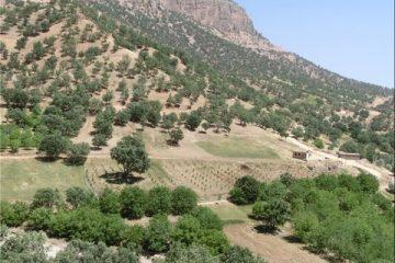 طرح جنگل کاری در ۲۵۰ هکتار از مراتع خوانسار