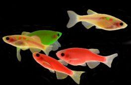 هشدار محیط زیست درباره ماهی «زبرا»