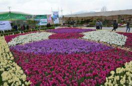 رتبه نخست تولید گل شب بو در کشور به خمینی شهر اختصاص دارد
