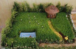 آموزش کاشت انواع سبزه هفت سین که به کارتان میآید