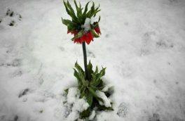 آغاز گام دوم بهار در غرب اصفهان با برف و باران
