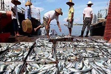 صید ۲۴۰۰ تن ماهی توسط صیادان گیلانی