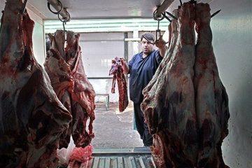 گوشت ارزانی که فقط در سازمان حمایت پیدا میشود + تصاویر