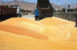 وزارت صمت شرایط جدید صادرات و واردات را ا علام کرد/ صادرات گندم همچنان ممنوع است