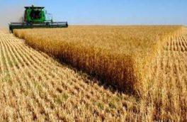 برداشت محصولات زراعی در لرستان آغاز شد/ پیشبینی خرید ۵۰۰ هزار تنی گندم و جو