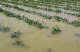 خسارت ۱۲۷ میلیارد تومانی سیل به بخش کشاورزی بروجرد
