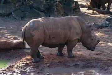 دستگیری صاحب باغ وحشی در کانادا