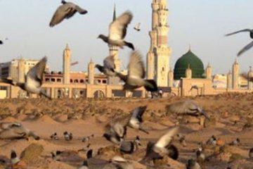هدف از تخریب بقیع جلوگیری از گسترش اسلام در غرب بود