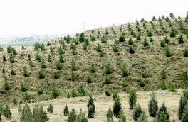 ۵۰ هزار هکتار از بیابانهای آران جنگل دست کاشت است