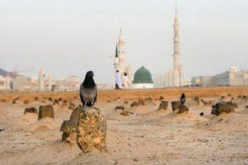 ضرورت تبیین جنایات وهابیت و آل سعود در مساجد استان تهران