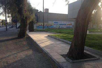 درختان در حصار آسفالت، نفس تازهای میکشند