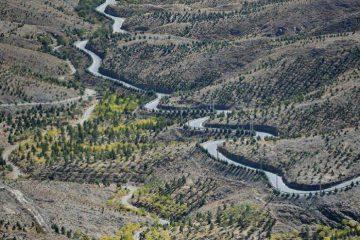 ۲۵ کیلومتر کمربند سبزحفاظتی درهمدان ایجاد میشود