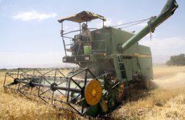 برداشت بیش از ۱۵۰۰ تن گندم در نطنز