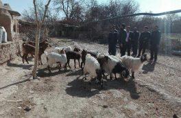 پرورش دامهای کم آب بر در استان یزد در دستور کار باشد