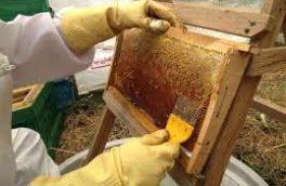 عسل تقلبی کیلویی چند؟