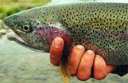 نخستین آزمایشگاه مرجع ماهی قزلآلا کشور در شهرکرد فعال شد