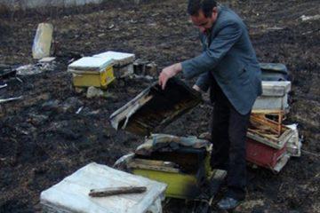 آتش در لانه زنبورها/ ۷۸۰ کندو در کوزران طعمه حریق شد