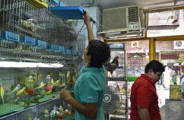 ساماندهی پرندهفروشان خیابان عطار در آینده نزدیک