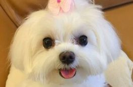 ماجرای دزدیدن سگ ۴۰ میلیون تومانی