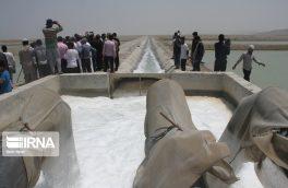 قطع برق بخشی از میگوهای پرورشی دلوار بوشهر را تلف کرد