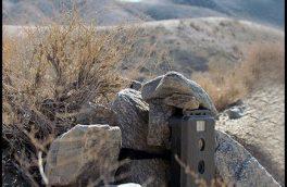دوربینگذاری در زیستگاههای حیات وحش محدودیت ندارد