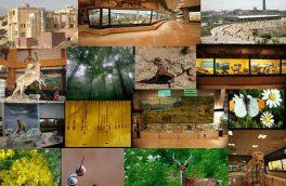 برگزاری نمایشگاه اوریگامی درباره حفاظت از طبیعت و حیات وحش