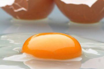 ۳۰۰ تن مازاد تولید تخم مرغ