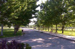 کدام درختان شهر هرس میشوند؟