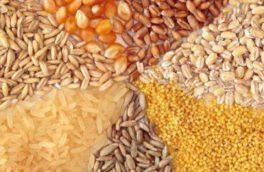 میزان مصرف نهاده قزوین حدود ۴۰ هزار تُن است