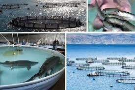 ظرفیت تولید هزار تن ماهیان خاویاری در لرستان