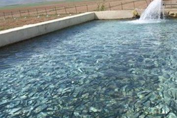 ۲۸ هزار تن انواع آبزیان در لرستان تولید میشود/ تکثیر سالانه ۱۲۰ تا ۱۳۰ میلیون بچه ماهی