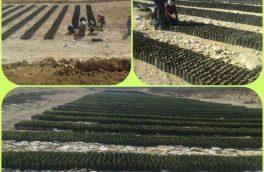 تولید ۲۰۰ هزار بوته مرتعی در شهرستان دلفان