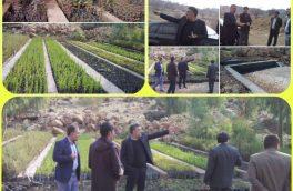 نهال کاری در عرصه های طبیعی شهرستان پلدختر آغاز شده است
