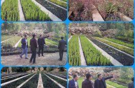 تولید بیش از ۳ میلیون اصله نهال جنگلی در سطح نهالستانهای استان لرستان