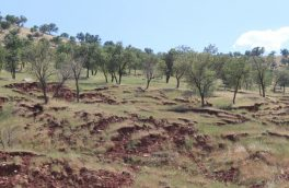 کاهش ۴ درصدی عملکرد محصولات کشاورزی به دلیل فرسایش خاک