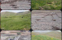 تولید ۴۶۰ هزار تُن علوفه در سطح مراتع استان