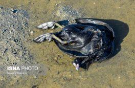 مردم از جابهجایی لاشه پرندگان مهاجر خودداری کنند