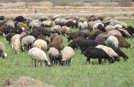 پروژه مدیریت چرا و کنترل دام در مراتع قشلاقی استان گلستان آغاز گردید